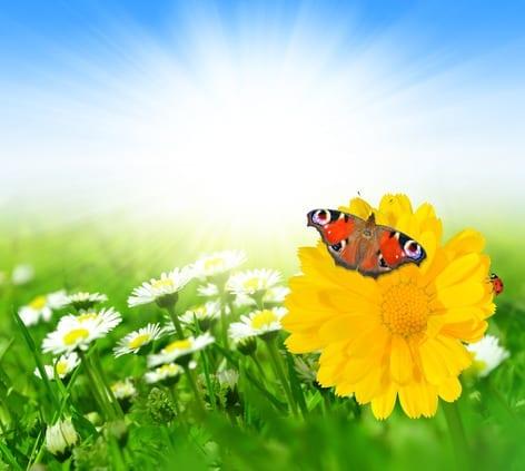 photodune-4735976-spring-flowers-xs